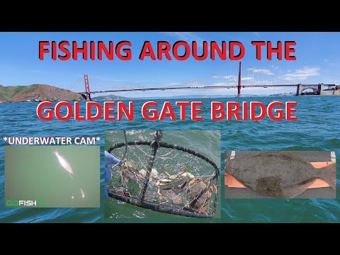 Halibut & Dungeness Crab | San Francisco Bay Area Fishing Trip