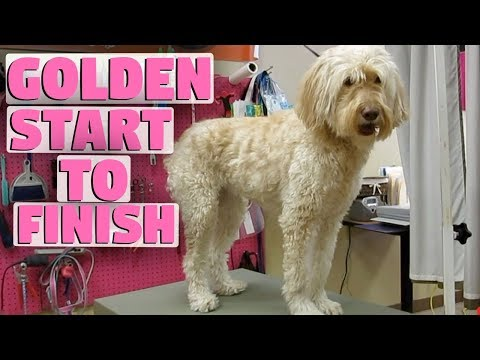 Grooming a dog start to finish