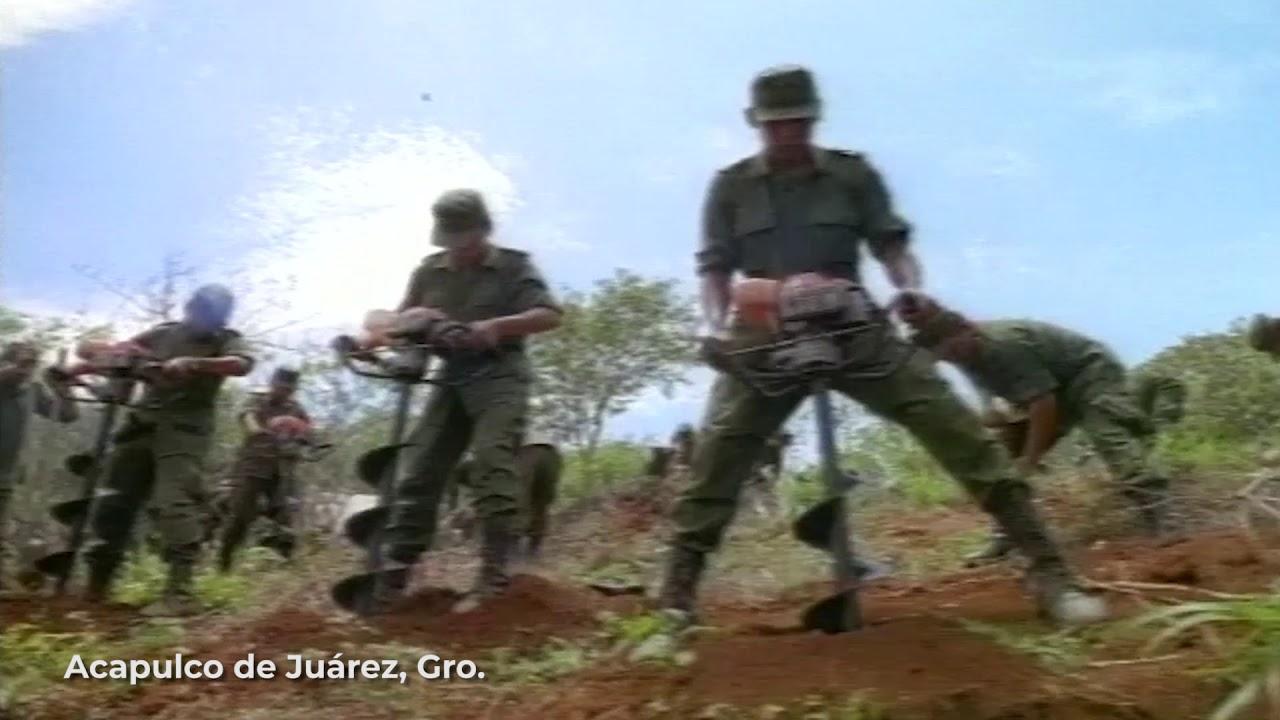 #SiempreConMéxico, Reforestación en Acapulco de Juárez, Guerrero 2001. #SiempreContigo.