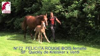072 FELICITA ROUGE BOIS