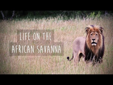 Life on the African Savanna