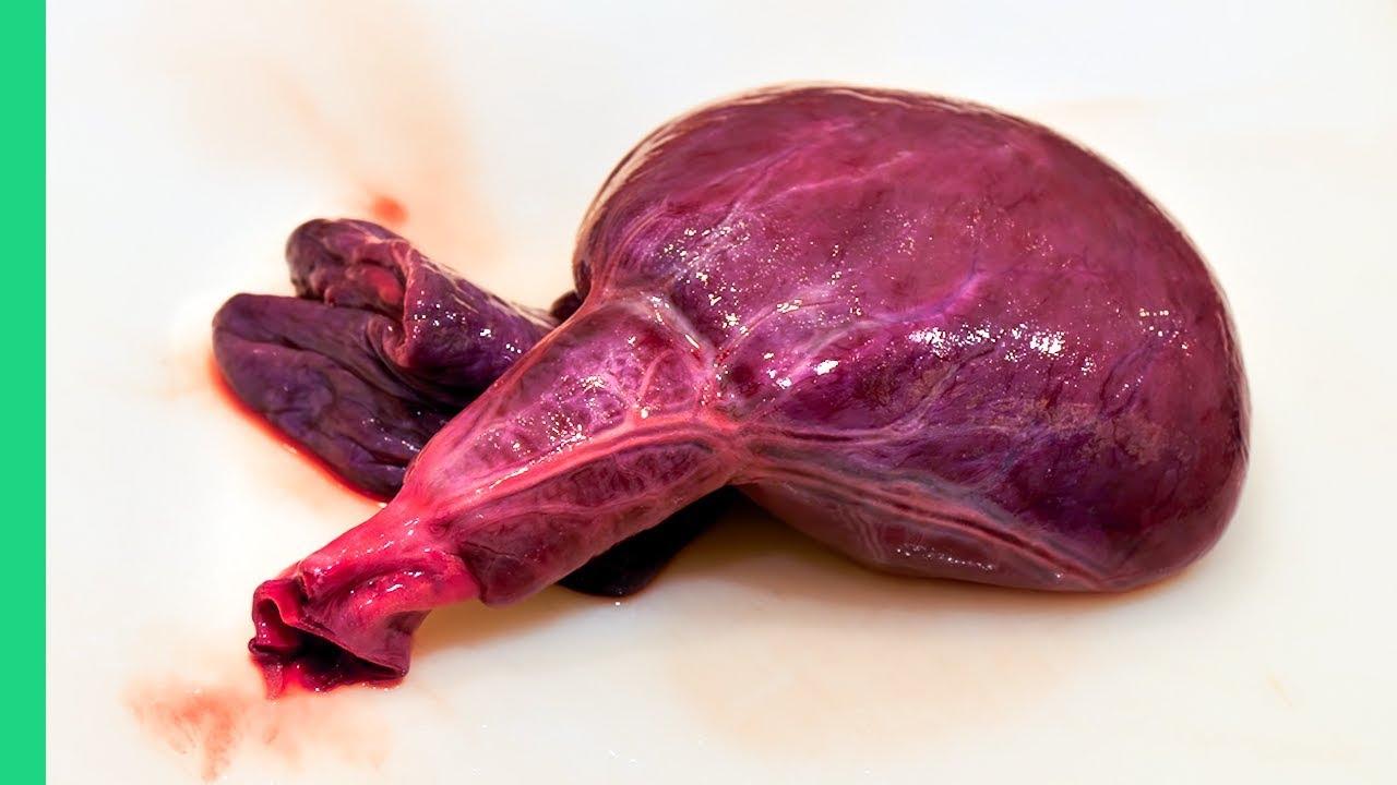 Japanese raw shark heart