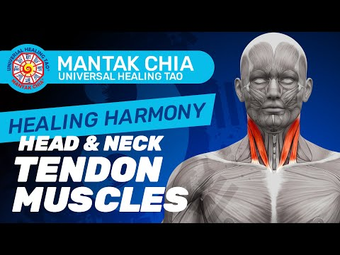 Mantak Chia Healing Harmony in Frankfurt 2015_5) Head & Neck Tendon muscle