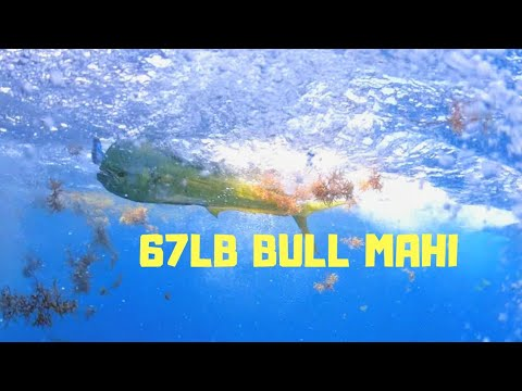 67lb Bull Mahi - May 23, 2019