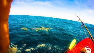 Lone Man Gets Towed For Miles in Kayak By 11 Foot Hammerhead Shark(WWW.TEAMREBELFISHING.COM https://www.facebook.com/pages/Team-Rebel-Fishing/158965753845 Hooked a hammerhead in 50ft of water and got drug ..., 2014-03-24T03:07:56.000Z)