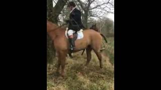 Смешное видео про лошадей Лошадки преодолевают канаву. Охота на лис. Конная охота(Очень смешно лошади и всадники перепрыгивают канаву. Судя по всему, на английских гунтерах, лошадях, исполь..., 2016-07-15T06:47:28.000Z)