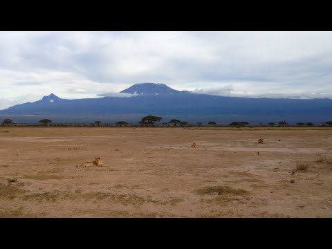 A Trip to Amboseli