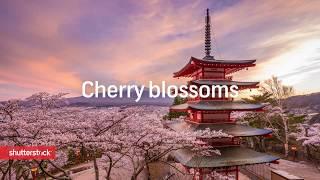 Spring in Japan - Stock Footage   Shutterstock