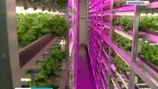 видео Выращивание зелени в теплице как бизнес: инструкция