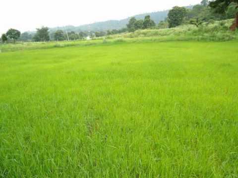 Sangathil Padatha