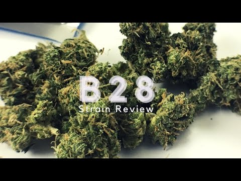 B28 Strain Review - ISMOKE - YouTube