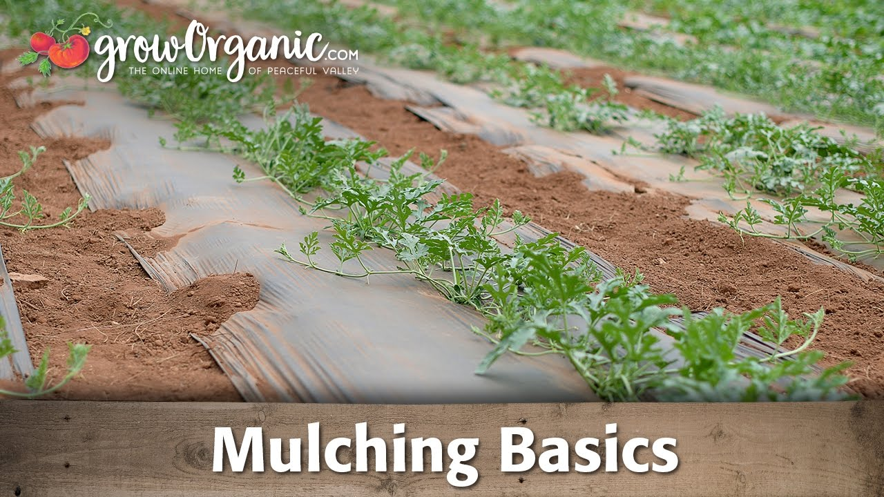 What Is The Best Mulch For Vegetable Gardens Frador