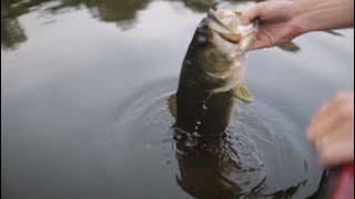 Lake Fork Guy's Top 5 Topwater Baits