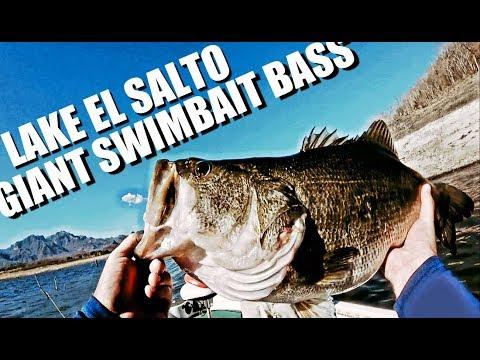Fishing BIG Swimbaits For GIANT Lake El Salto BASS || Ep. 4