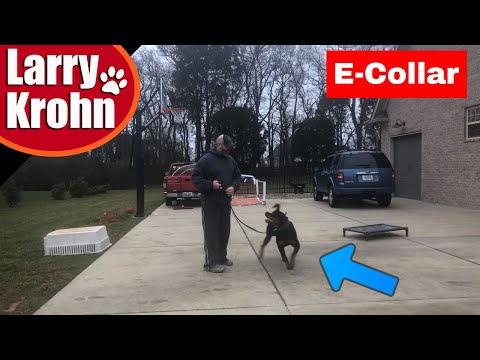 Why and how I use e collars / Rottweiler E Collar (Shock Collar Myths)