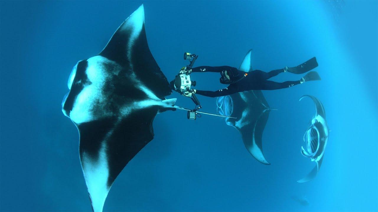 Dive into an ocean photographer's world | Thomas Peschak