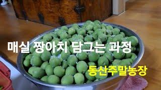 #매실 짱아치 담그는 과정 #동서부부 #동산주말농장 행…