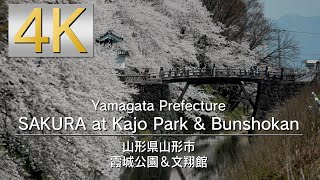 4K SAKURA at Kajo Park & Bunshokan 山形県 霞城公園&文翔館