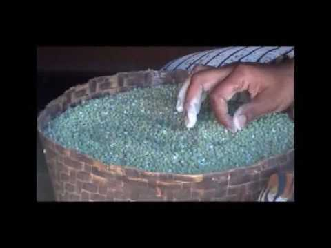 GREEN GRAM CULTIVATION  PRESERVATION