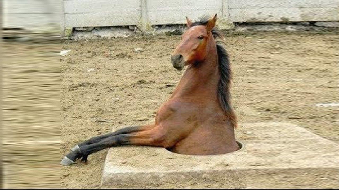 キュートで面白い馬の瞬間 🐎 - YouTube