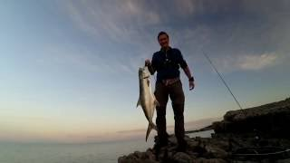 Shore jigging. Leerfish 7 kg. 03.06.2016.