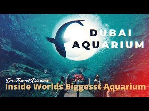 Dubai Aquarium and Underwater zoo I Dubai Mall | KING CROC |  #dubaiaquariumandunderwaterzoo