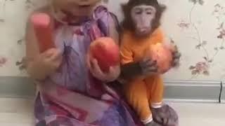 """Komik Maymun"""