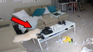 HIDDEN CAMERA ON MY DOG LEFT HOME ALONE!! (YOU WON'T BELIEVE WHAT HAPPENS…)