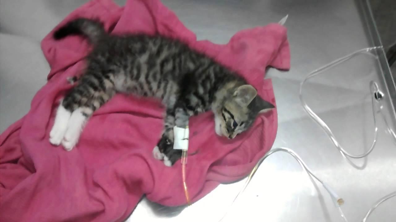 Resultado de imagen para gatos intoxicación