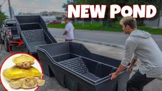 buying-700-new-turtle-pond