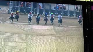 韓国競馬済州島ロバのレース400メートル