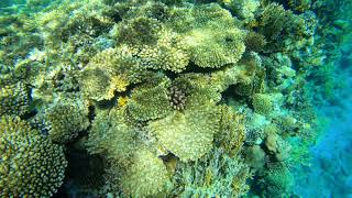 Подводный мир Красного Моря Египет Шарм эль Шейх Grand Rotana Resort Spa