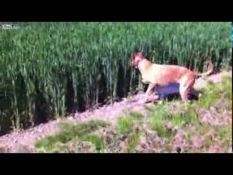 Skippy Dog bouncing through a field