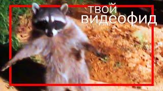 ЕНОТ 'ЧЁ ЗА!?' || Видеофид