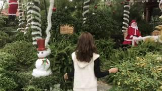 Noel liệu có phải là sự cô đơn | Chanh TV