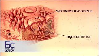 Анатомия вкуса | Большой скачок