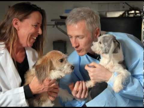 Jessica Ward — Terry Center: New Era in Veterinary Medicine
