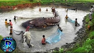 5 Misteriosas Criaturas Marinas Gigantes Captadas en Video