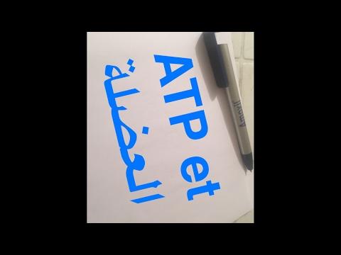 الجزء الثاني AtP و العضلة live
