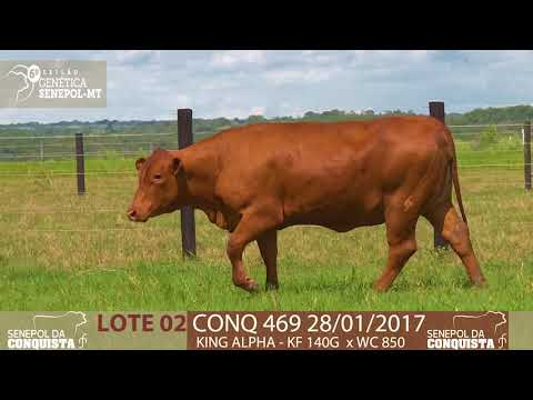 LOTE 02 CONQ 469
