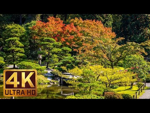 Seattle Japanese Garden in 4K UHD | Birds Signing & Nature Sound for Relaxation - Part#2