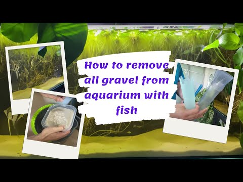 How To Remove All Gravel From Aquarium With Fish