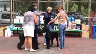 Региональная выставка собак всех пород ранга САС-КЧФ 8 июля 2017 Липецк эксперт Белкин А