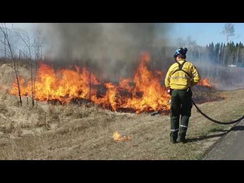 Waskesiu: réduire les risques d'incendie - Parc national de Prince Albert