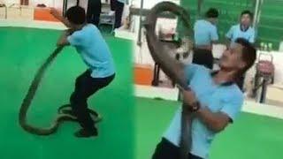 Video Detik-detik Pria Digigit Kobra yang Dirawatnya, Berhenti Bernapas saat Tiba di Rumah Sakit