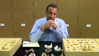 Human Ancestor Species From Ethiopia - ጥንታዊ የሰው ዘር በኢትዮጵያ