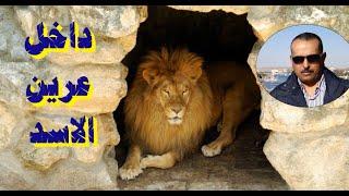 تعلم  الانجليزية من خلال  المقال القصير Learn English  through the short article - Hugging lions