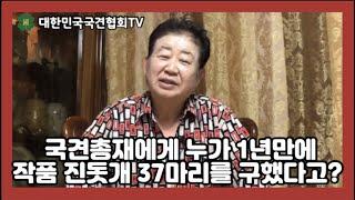 국견 총재에게 누가 1년만에 작품 진돗개 37마리를 구…