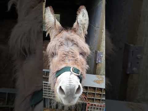 Nancy & Newman - Check it Out...Harriet, The Singing Donkey is Back