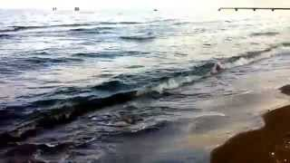 Собаки. 29 мая 2011 Пляж Зиря